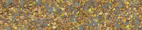 Kostenlose Blätter Laub Boden Textur