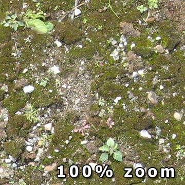 Kostenlose Moos Textur Waldboden Download Detail